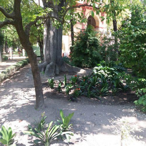 Plantaciones en el Alcázar (Sevilla)