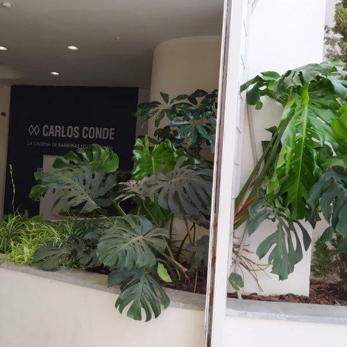 Mantenimiento jardines CC Way (Dos Hermanas)