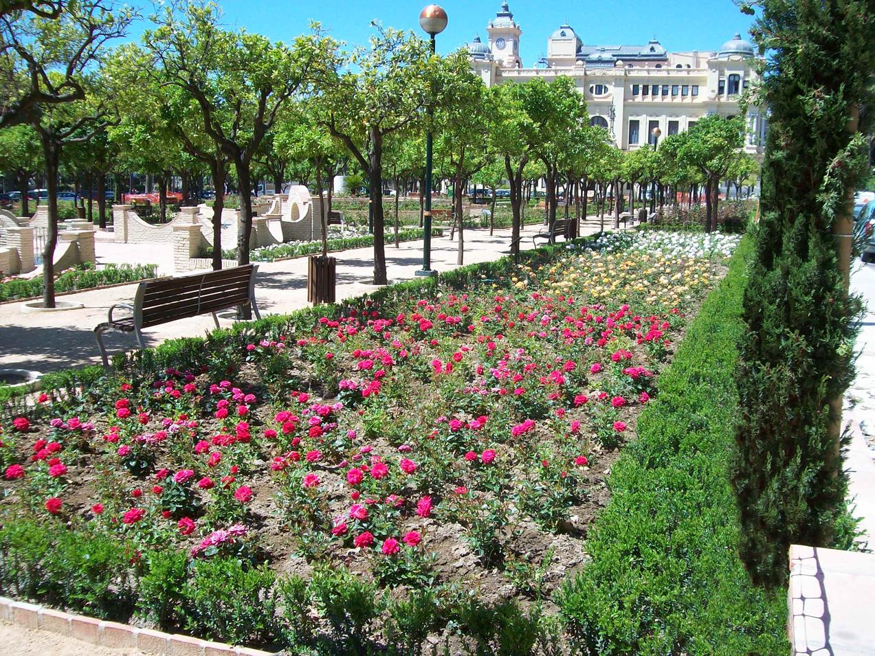 Plantación rosaleda