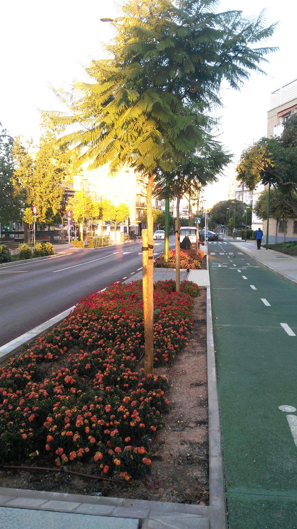 Plantación y riego calle Greco